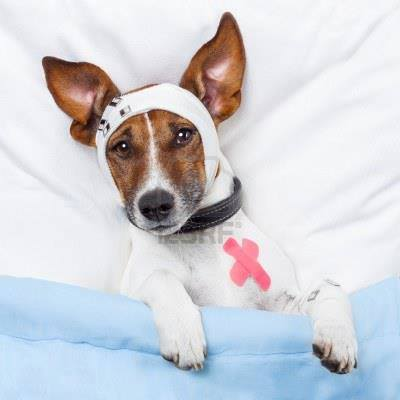 неврология у собак