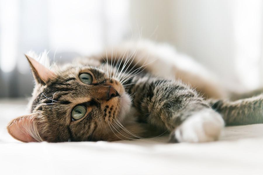 Котенок часто чихает - Клуб любителей животных