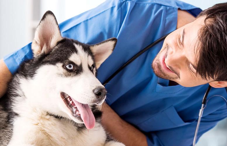 Акция на стерилизацию собак в Москве