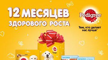 Подарки котятам и щенкам