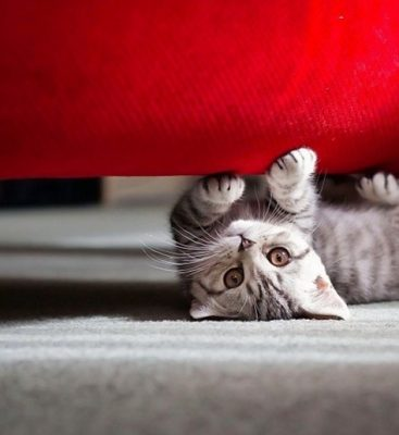 Как отучить кошку царапать мебель и обои: 7 идей